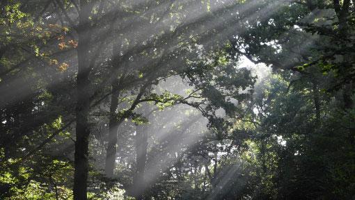 Wald bei Hof Berg