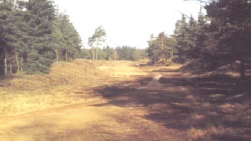 Altes Ochsenweg-Bild bei Stadum