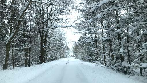Schnee-Allee bei Stadum